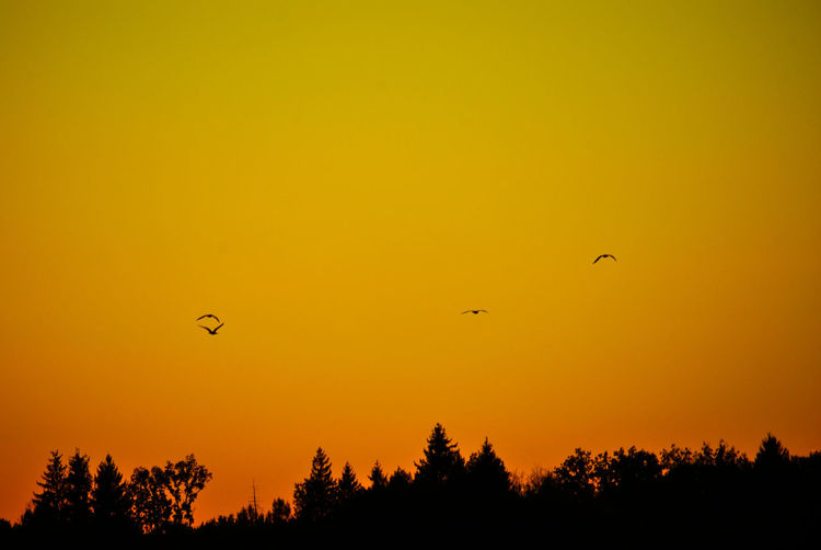 Animal Animal Themes Animal Wildlife Animals In The Wild Beauty In Nature Bird Flying Mid-air Nature No People Orange Color Outdoors Plant Scenics - Nature Silhouette Sky Sunset Tranquil Scene Tranquility Tree Vertebrate