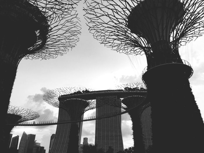 Beneath the SuperTree Gardens By The Bay Breathtaking