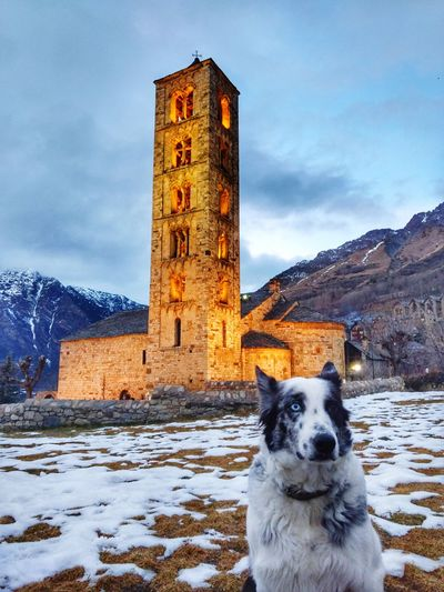 Mountain Road Nature Tranquil Scene Taüll Santclimentdetaull Adventure Dog Cold Temperature Winter Snow Dog Tower Sky Pets