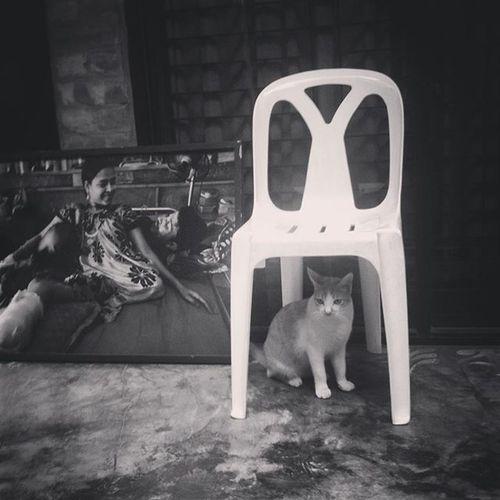 Untitled ! 12.10.2015 Js Jashimsalam Photographer Photos Documentary Cat Chair Photography Fotomobile Frame Life Instagram Dhaka Bnw Blackandwhite B &wMono Dhaka Bangladesh Pathshala Everydaybangladesh
