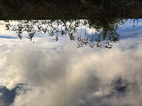 Reflections Reflections Power Lines Cloud - Sky Sky Plant Nature No People Tree Day Low Angle View Reflection Water Beauty In Nature Outdoors Wet Tranquility Growth