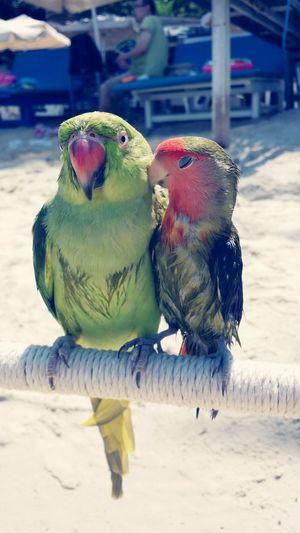Pets Birds Birds Of EyeEm  Animals Beach On The Beach