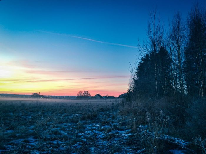 Nature Beauty In Nature Tranquil Scene Tranquility Tree Blue Scenics Landscape Field Winter Sky Snow Outdoors Cold Temperature No People Sunset Bare Tree Day