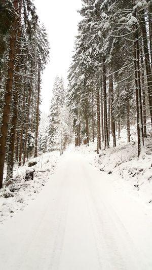 Trees Growing On Snowy Field