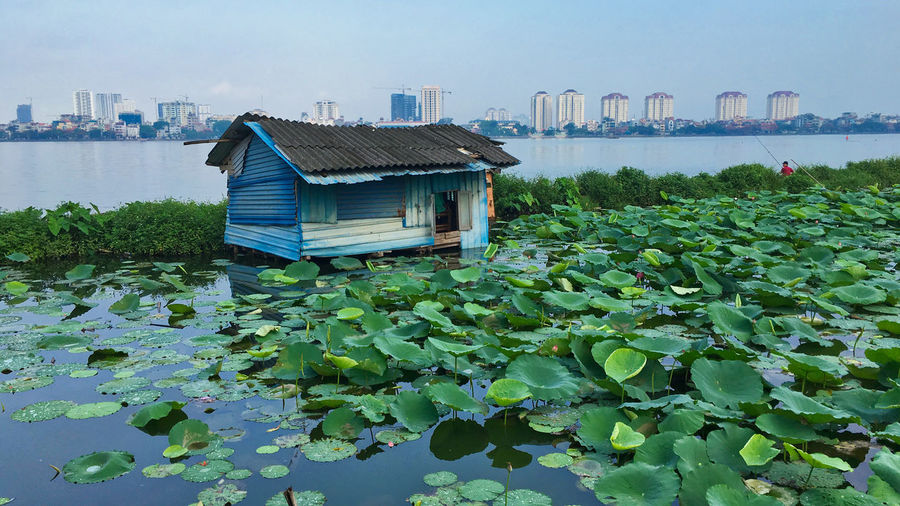 Old and new in Hanoi Architecture Beauty In Nature Building Exterior Built Structure City Clear Sky Day Floating On Water Green Color Growth Hanoi Lake Leaf Nature No People Outdoors Plant Shack Sky Water Water Lillies Visual Creativity #urbanana: The Urban Playground