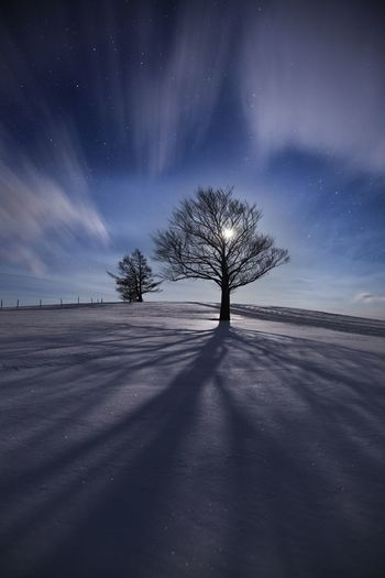 Silhouette Bare Tree On Snow Covered Landscape Against Sky At Night