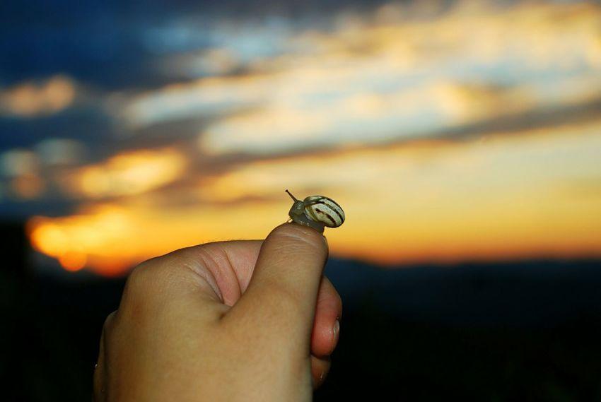 Rain gifts Mountain Peak Sunset Sun Summer Rain After Rain Me Love Nature Macro Clouds Horizon Shades Human Hand Insect Close-up Sky Animal Antenna Snail Slug Arthropod Finger EyeEmNewHere