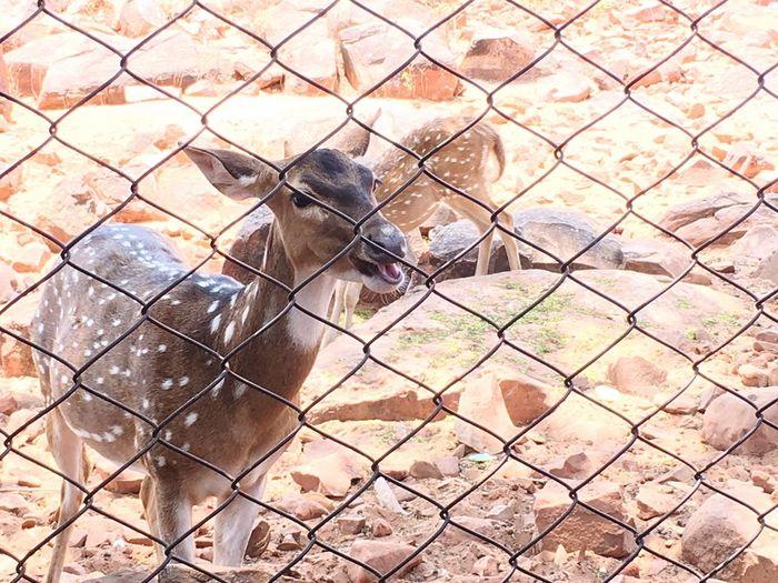 IPhone Photography Outdoors Deer Park