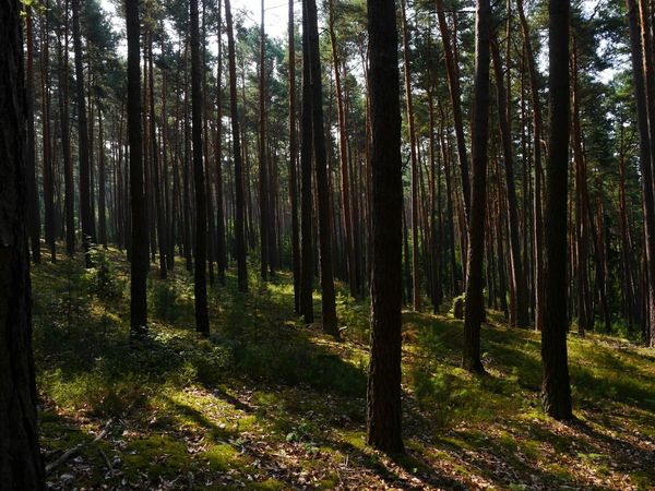 In the spessart forest...like a climatronic...coooool breeze... The Environmentalist – 2014 EyeEm Awards EyeEm Nature Lover Our Planet Light Up Your Life
