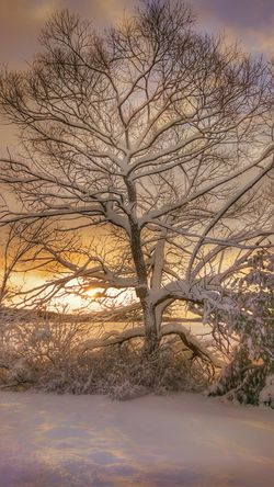 Backlight... Mainephotographer Newenglandphotographer Maine Scenery Snow Covered Snowscape Mainethewaylifeshouldbe NewEnglandWinter Snow Day Snowfall Mainelife