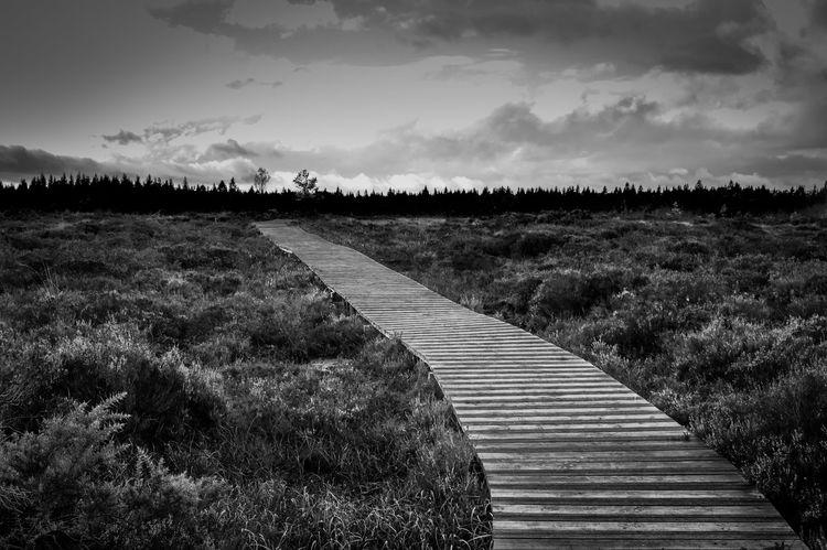 Abbeyliex Boardwalk Over The Wet Marsh Bogland Ireland🍀 Laois Leading Narrow Perspective Scenics The Way Forward Tranquil Scene Tranquility
