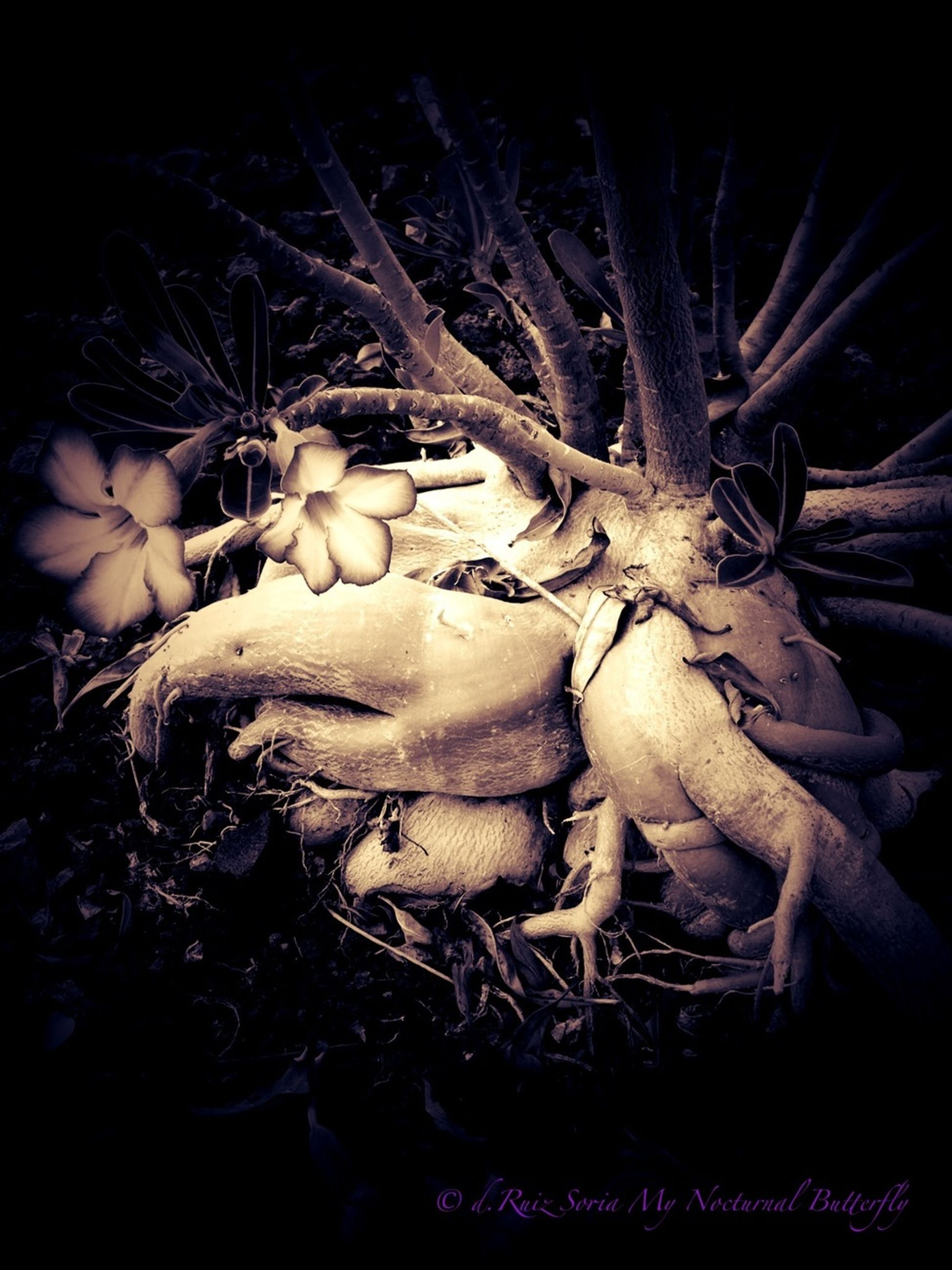 night, branch, bare tree, close-up, tree, black background, dark, nature, growth, auto post production filter, dead plant, no people, studio shot, dried plant, plant, tranquility, outdoors, spooky, forest, dry