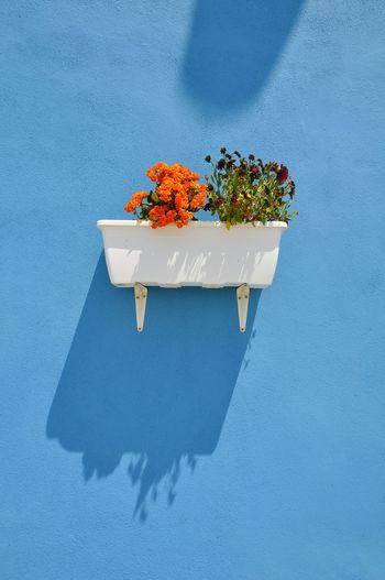 Close-up of potted plant against blue wall