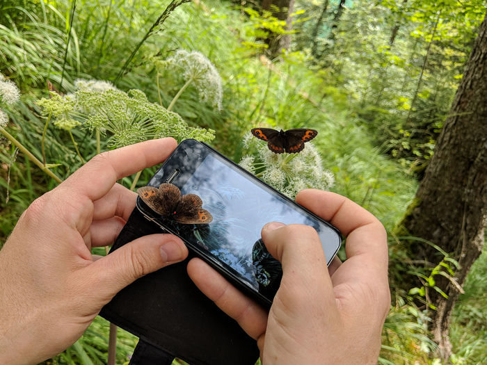 butterfly sitting on smartphone while taking a photo Two Animals Human Hand Butterfly - Insect Unrecognizable Person One Person Human Body Part Forest Technology Smart Phone Photography Real People Holding Summer Exploring Grass Field Nature Animal Wildlife Contrasts Day Outdoors Hand Body Part