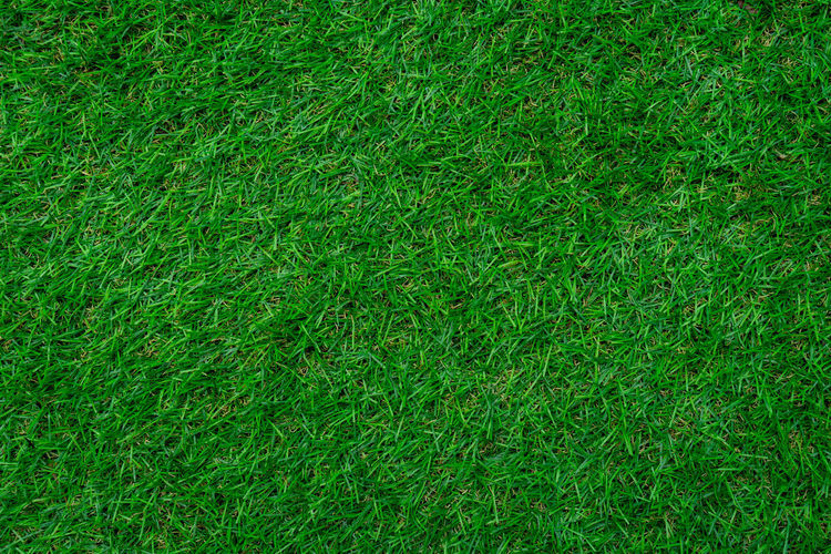 Full frame shot close up grass texture. Green Color Full Frame Grass Backgrounds Plant Land Nature Field Growth Day No People High Angle View Lush Foliage Lawn Foliage Beauty In Nature Outdoors Close-up Textured  Playing Field Turf Blade Of Grass Grass Green Color No Peple Textured  Shot Foot Ball Stadium