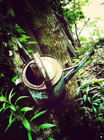 Nature vs Tools , Metamorphose , Babel