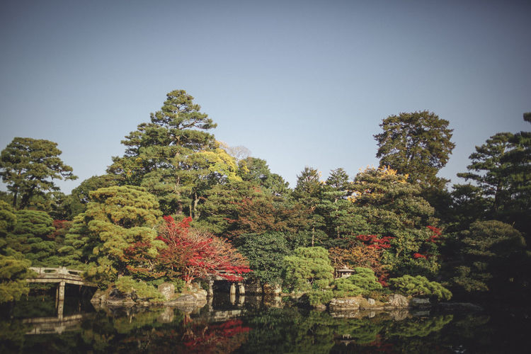 Beauty In Nature Clear Sky Day Green Color Growth Japan Japan Photography Japan Scenery Japanese  Japanese Garden Japanese Style Nature No People Outdoors Sky Tree