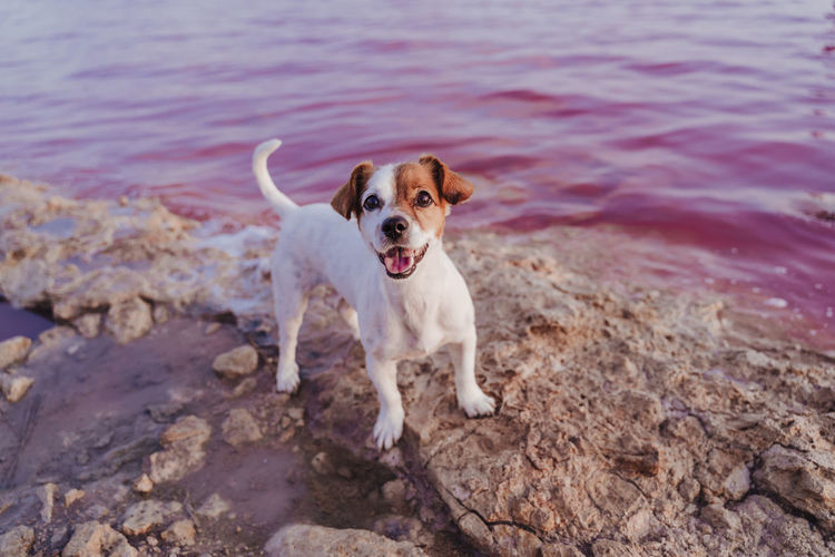 Portrait of dog on rock by lake