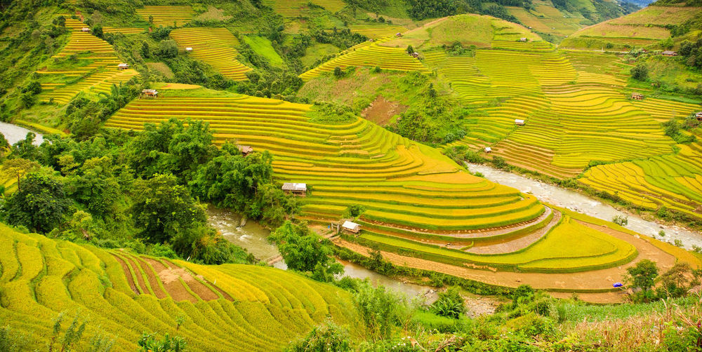 terraced field in mu cang chai- north vietnam Agriculture Beauty In Nature Environment Farm Landscape No People North Vietnam Photos Rice Field Terrace Terraced Field