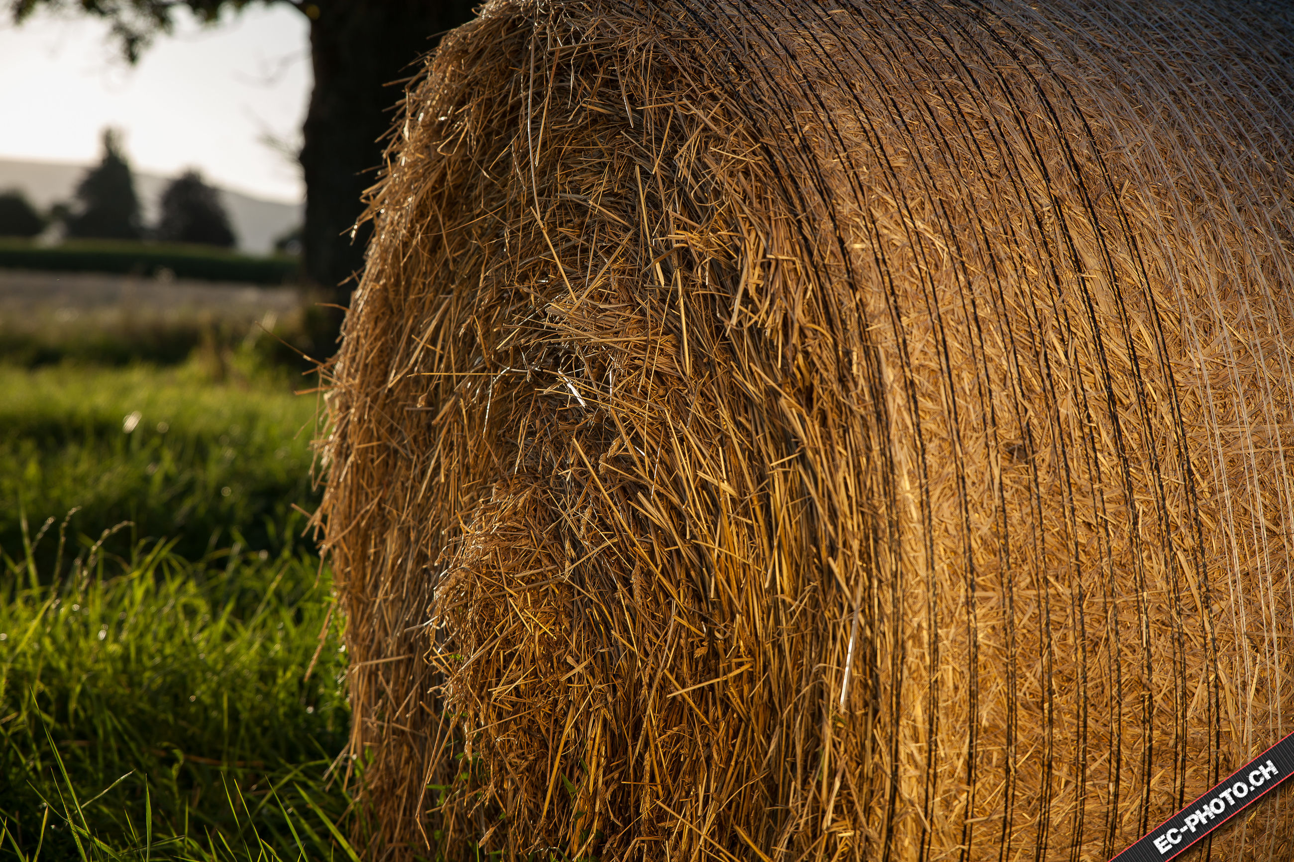 close-up, detail, focus on foreground, brown, field, growth, rural scene, day, tranquility, nature, outdoors, beauty in nature, grassy, no people, extreme close-up, tranquil scene, scenics
