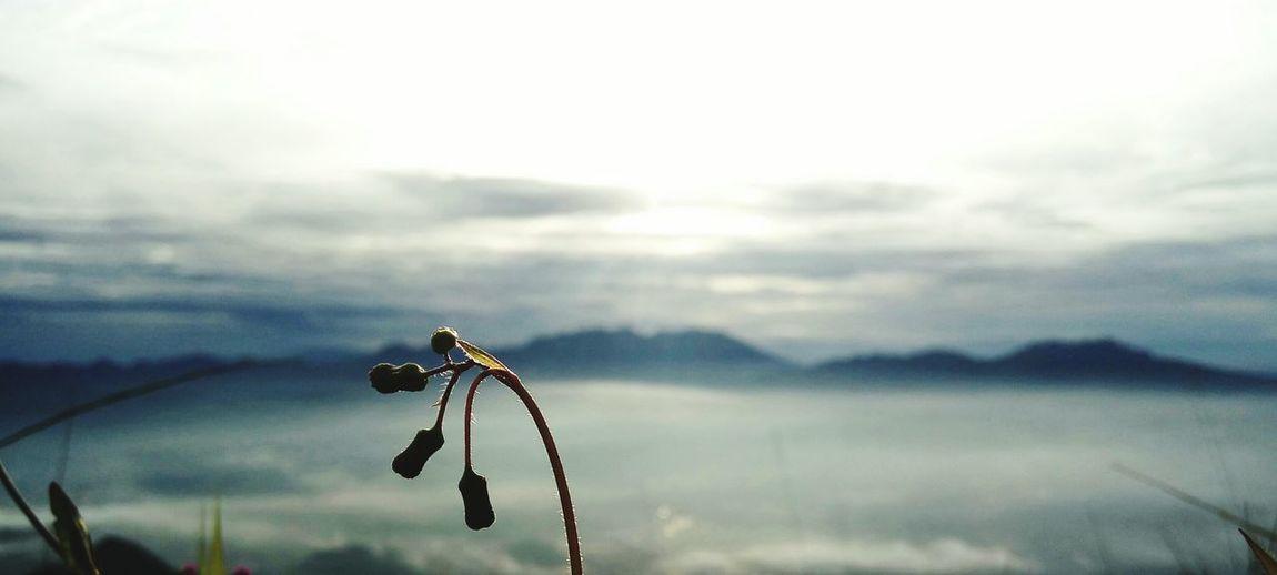 Fokus flower