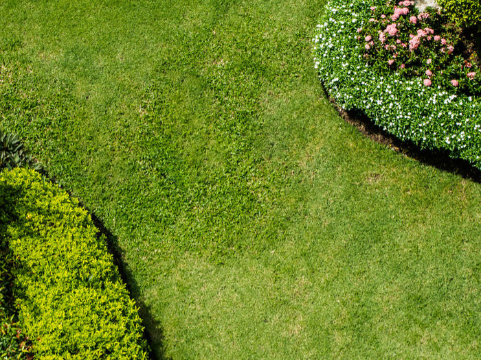 High angle view of fresh green field in garden