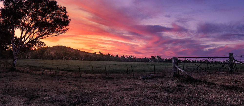 sunset over farmland at Ponto Falls Fence Cloud - Sky Pink Sky Colorful Australia Travel Sunlight Field Grass Farm New South Wales  Australia Tree Sunset Purple Field Tranquility Agriculture Cloud - Sky Landscape Outdoors Nature Sky Growth Beauty In Nature No People