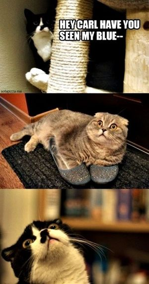 Cat LOL LMAO Funny