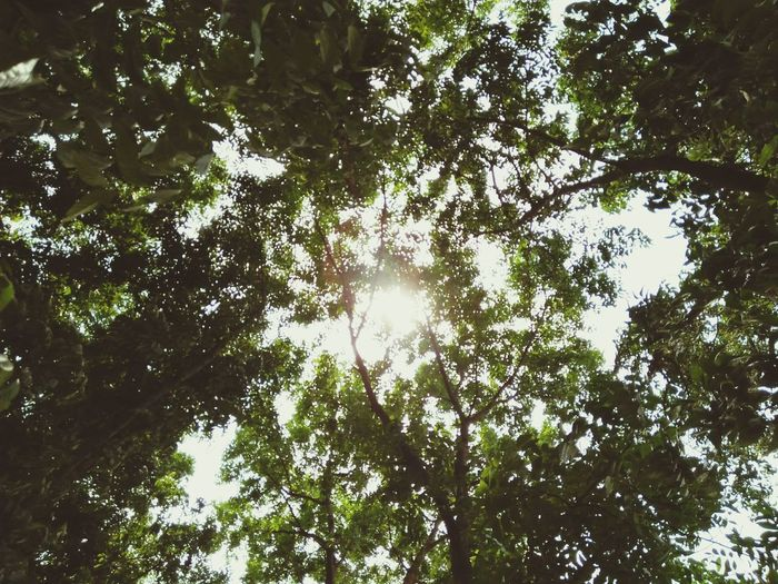 Nature Tree Low Angle View First Eyeem Photo