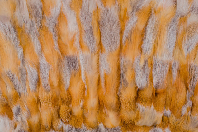 Texture and background of red fox fur Elégance Fashion Hair Plush Red Winter Abstract Background Cold Cuddly Decorative Details Fluffy Fox Fur Fur Coat Fur Jacket Furry Gray Mink Red Fox Red Fox Fur Textile Texture Warm