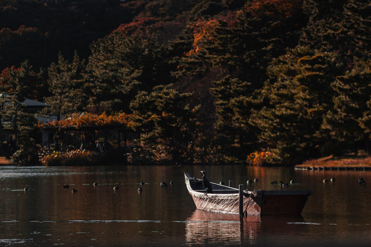 Autumn Japan Nature Travel Beauty In Nature Bird Day Environment Lake Lifestyles Light And Shadow Nature Nautical Vessel No People Outdoors Plant Reflection Rowboat Travel Destinations Tree Water Waterfront