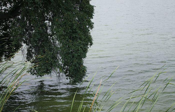 Lake Ukraine Water Wawes Tree Nature Landscape Photo Canon