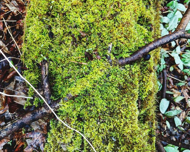 High angle view of lichen growing on tree