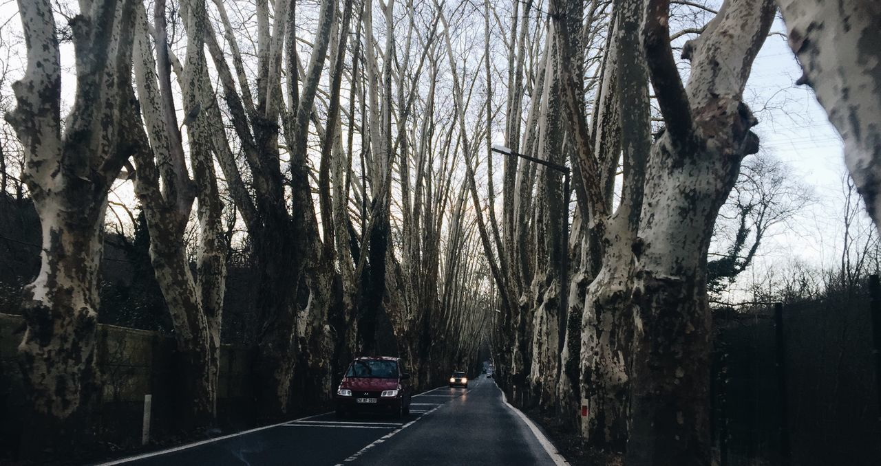 tree, tree trunk, transportation, car, land vehicle, the way forward, nature, bare tree, branch, day, road, no people, outdoors, sky
