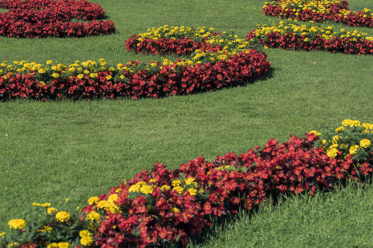 Begonia Flower Garden Flowers Red Beauty In Nature Begonia Day Field Flower Flower Head Flowerbed Fragility Freshness Garden Photography Grass Green Color Growth Horticulture Landscape Landscaped Lawn Nature No People Outdoors Plant Yellow