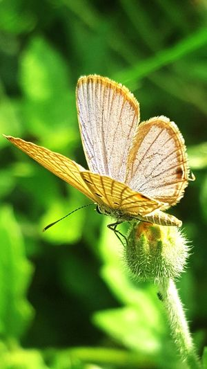 Close-up Insect Focus On Foreground Animals In The Wild One Animal Nature Plant Growth Beauty In Nature New Life Butterfly Day Softness Springtime Outdoors Botany Fragility Tranquility Green Color Scenics Nature Buterfly 🌺🌺🌺 Beauty In Nature Flower