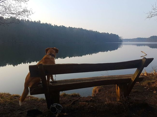 Relaxed Dog Relaxing Deutschland Nature Beauty In Nature Hund See Chilling Water Tree Full Length Men Silhouette Sky Lake Lakeshore Lakeside Countryside Farmland
