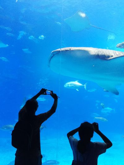 Rear view of people photographing fishes in aquarium