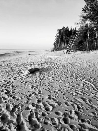 Black And White Tree Pine Tree Rampage  The San Sunset Sanset Sand Dune Water Beach Sand Summer Horizon Over Water Close-up