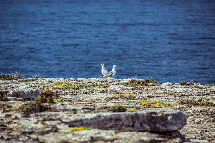 CLOSE-UP OF BIRDS ON ROCKS BY THE SEA