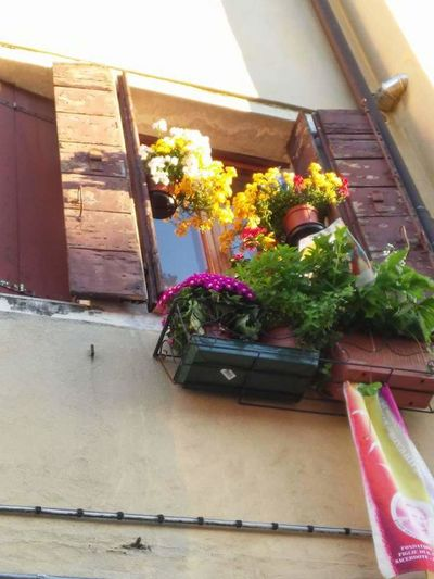 Flower Potted Plant Window Day Plant No People Outdoors Window Box Growth Nature Freshness Close-up