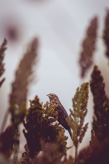 Animal Animal Themes Animal Wildlife Animals In The Wild Beauty In Nature Bird Close-up Cold Temperature Day Eagle Focus On Foreground Nature No People One Animal Outdoors Perching Plant Selective Focus Tree Vertebrate Winter