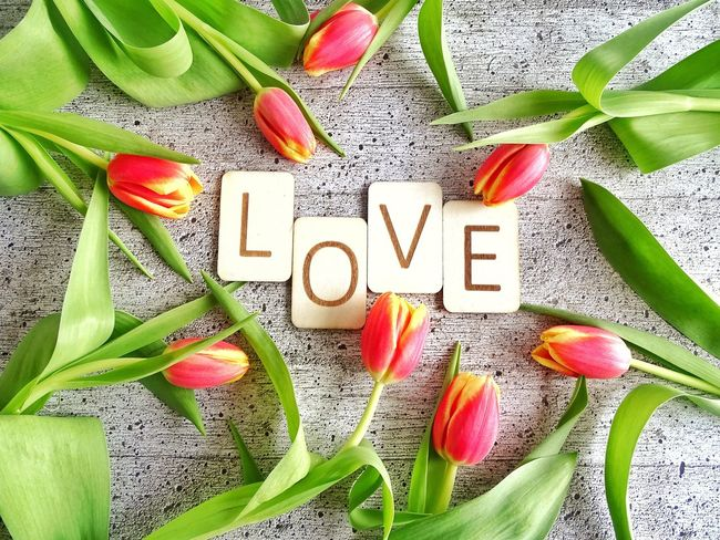 Love Letters Wooden Letters Springtime Spring Season Love Tulips Text Western Script Single Word Communication Freshness Message Green Color No People Alphabet Red Flower Nature Indoors  Day Close-up