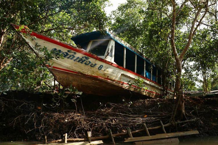 Tree Nautical