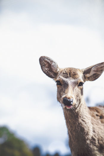 Portrait of deer against sky