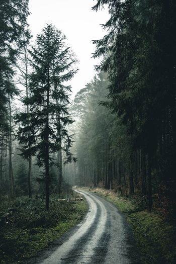 Tree Plant Direction Road The Way Forward Growth Transportation Scenics - Nature Non-urban Scene Diminishing Perspective Tranquil Scene Day Tranquility No People Forest Beauty In Nature Nature Sky Fog Outdoors