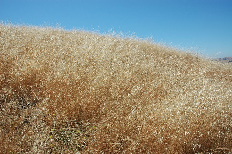 Clear Sky Desert Dry Grass Dry Weather Field Outdoors Sunny Weeds