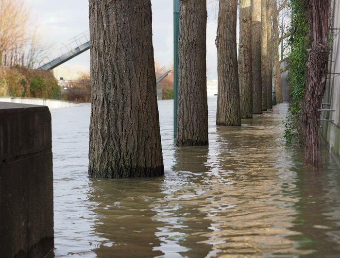 Paris Crue 2018 Flood Tree Nature Outdoors Water
