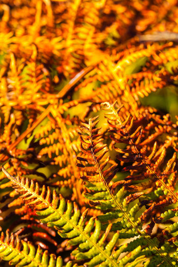 En balade vers Kerdonis, Belle-île en mer Beauty In Nature Catkin Close-up Day Fern Focus On Foreground Freshness Frond Growth Nature Needle No People Outdoors Plant Tree