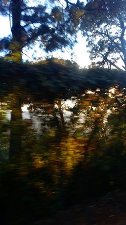 Reflection Tree Scenics Day Fast Motion Speed Of Motion Branches And Leaves